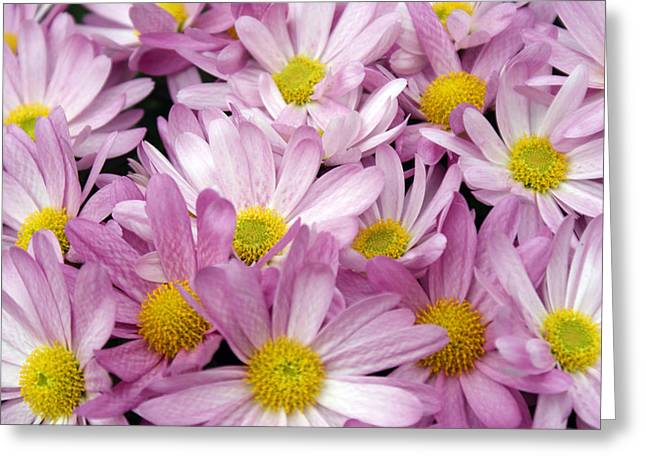 Pink White And Yellow Flowers Greeting Card by Fabian Cardon