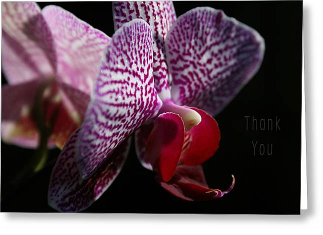 Pink White Orchids And A Reminder To Utter The Words Thank You. Greeting Card