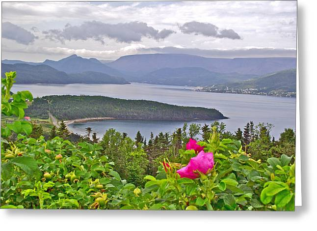 Pink Wild Rose At Photographer's Point In Gros Morne Np-nl Greeting Card