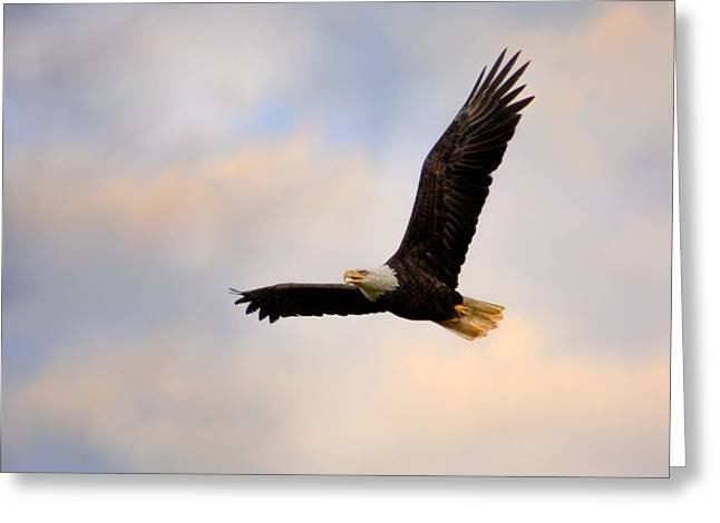 Pinson Mounds Eagle Greeting Card by Jai Johnson