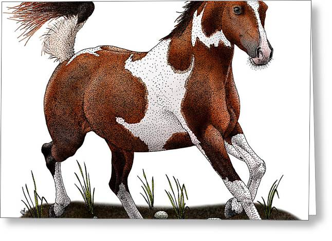 Pinto Horse Greeting Card by Roger Hall