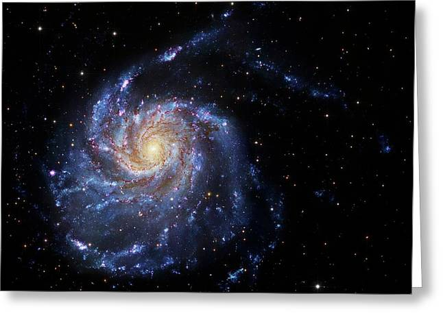 Pinwheel Galaxy Greeting Card by Robert Gendler