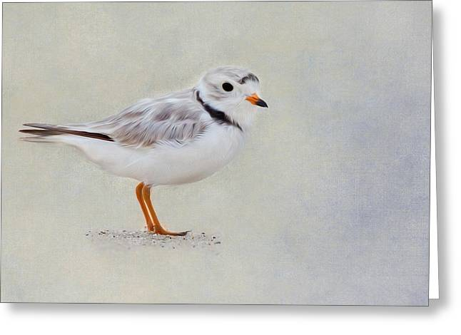 Piping Plover Greeting Card by Bill Wakeley