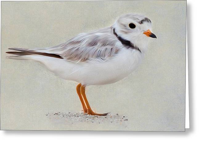 Piping Plover Square Greeting Card by Bill Wakeley