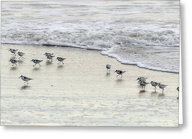 Piping Plovers At Water's Edge Greeting Card
