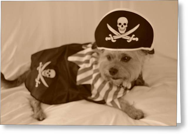 Pirate Dog Black And White Greeting Card by Kim Stafford