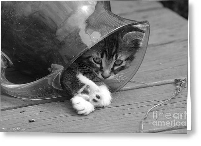 Pitcher Kitten Greeting Card by Tannis  Baldwin