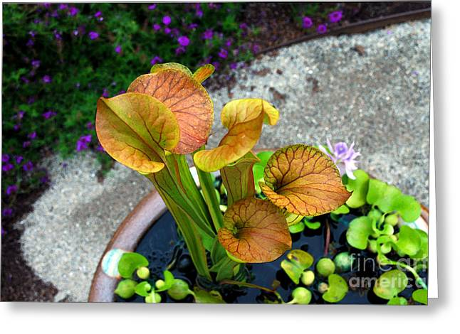 Pitcher Plants Greeting Card by Allen Carroll