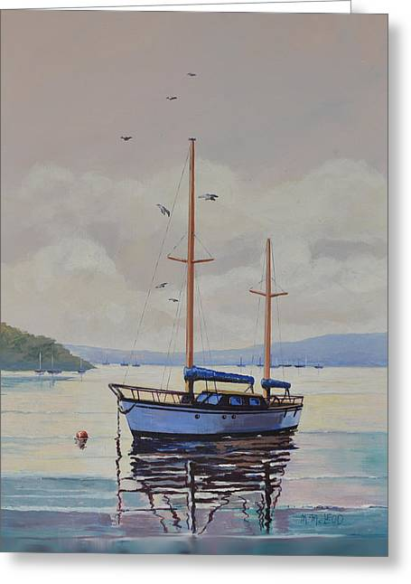 Pittwater Calm Greeting Card by Murray McLeod