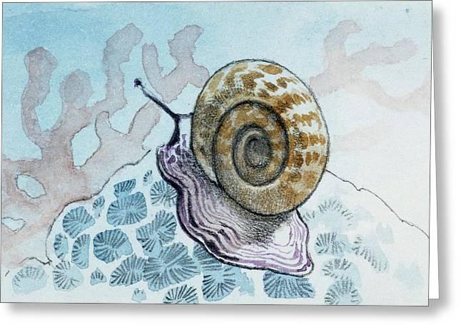 Planorbis Greeting Card by Deagostini/uig