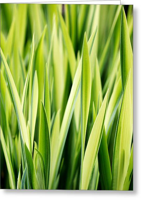 Plant Abstract 3 Greeting Card by Rebecca Cozart