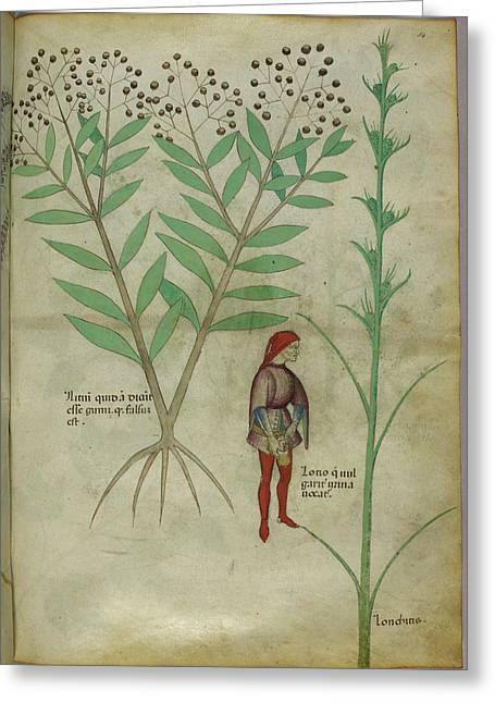 Plant Greeting Card by British Library