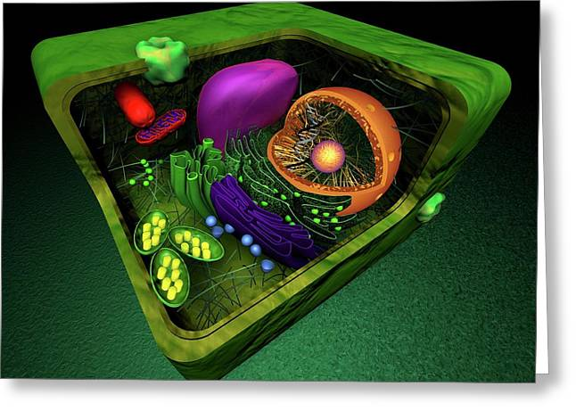 Plant Cell Greeting Card