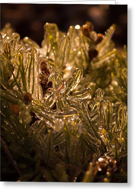 Plant Covered In Ice Greeting Card by Dave Garner
