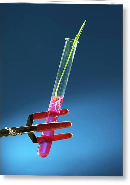 Plant In Test Tube Greeting Card