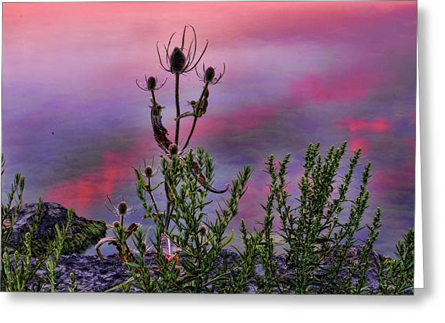 Plant Life By The Water Greeting Card