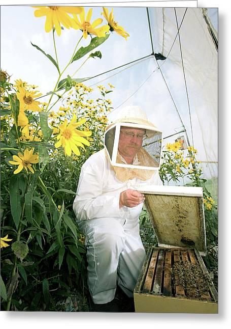Plant Pollination Greeting Card