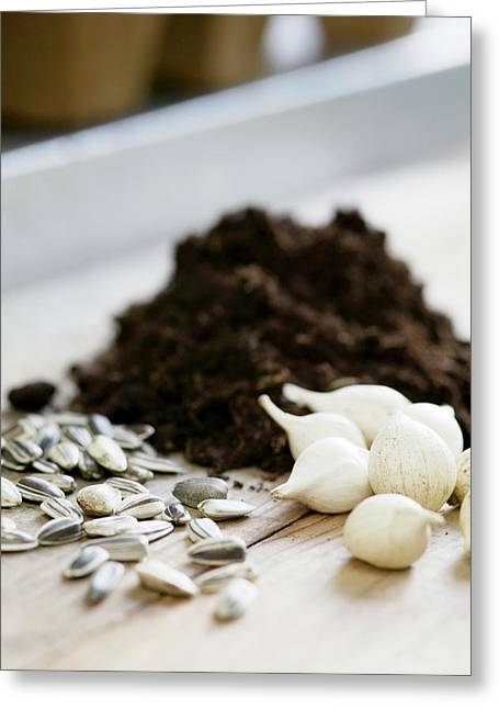 Plant Seeds And Bulbs Greeting Card