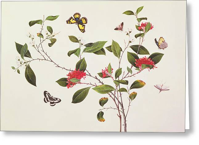 Plant Study With Butterflies Greeting Card