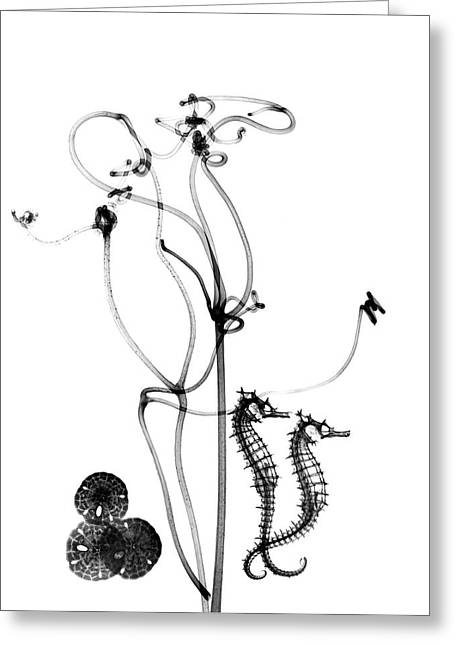 Plant Tendrils And Seahorses Greeting Card by Albert Koetsier X-ray