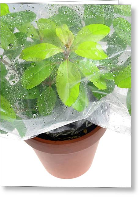 Plant Transpiration Greeting Card