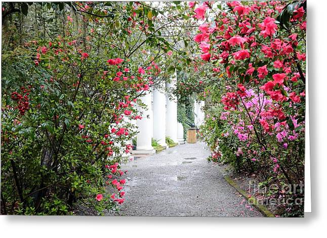 Plantation Path In Springtime - Digital Painting Greeting Card