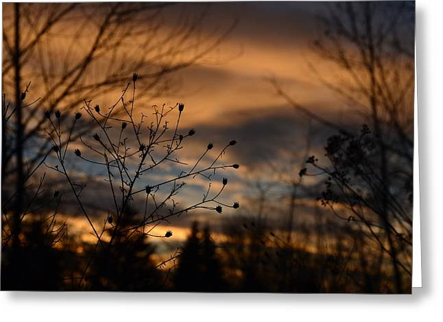 Planted Sunset Greeting Card
