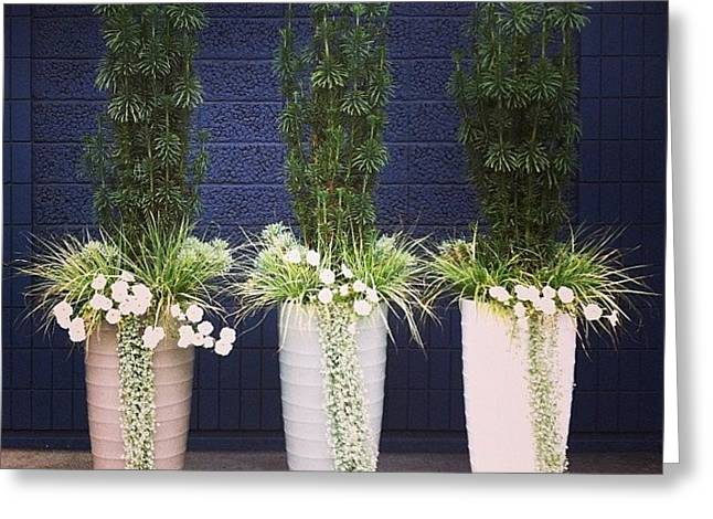 Planters And Blue Greeting Card