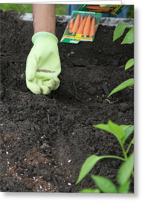 Planting Carrot Seeds Greeting Card by Jim West