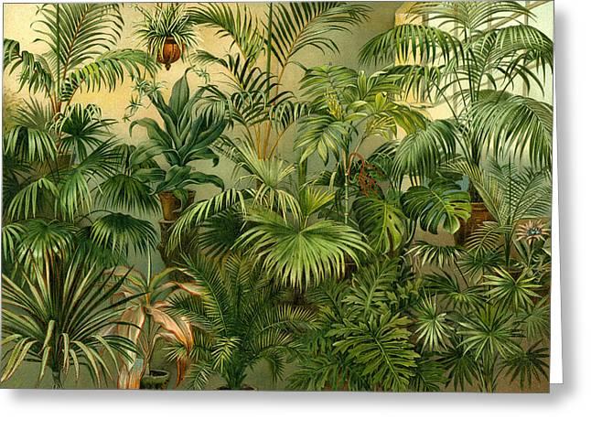 Plants 19th Century Kentia Baueri Chrysalidocarpus Greeting Card by English School