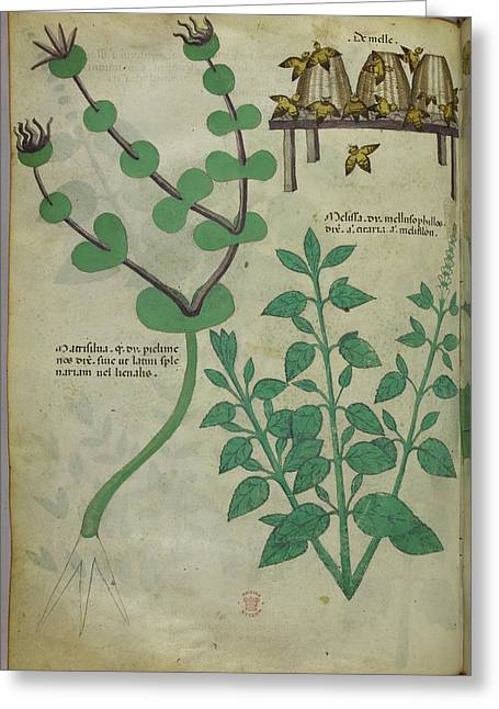 Plants And Beehives With Bees Greeting Card by British Library