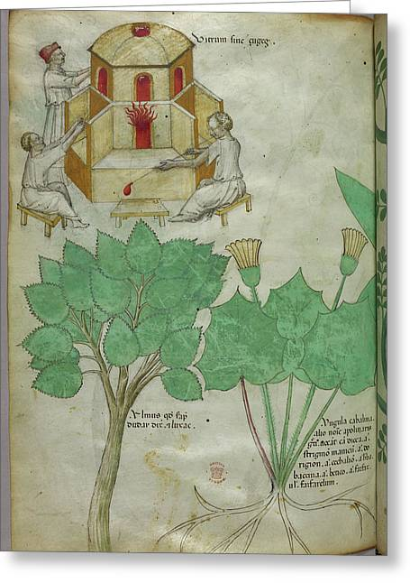 Plants And Glass-making Greeting Card by British Library