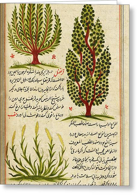 Plants Greeting Card by British Library