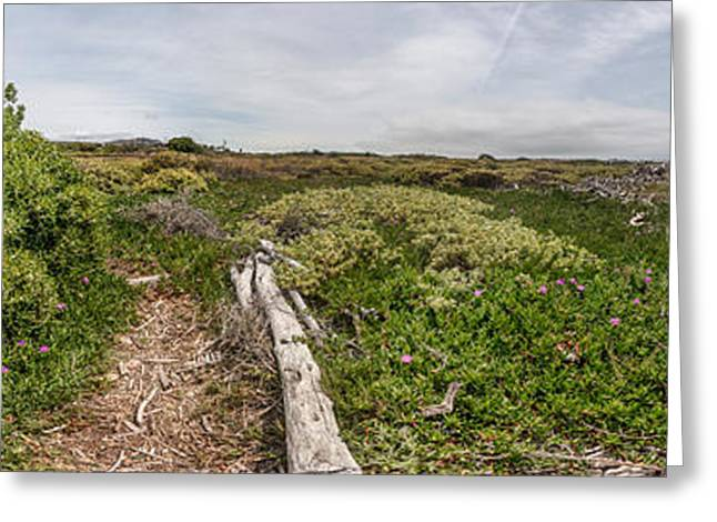 Plants On A Hill, Ventura, Ventura Greeting Card by Panoramic Images