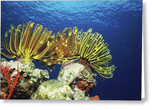Plants Undersea, Okinawa Prefecture Greeting Card