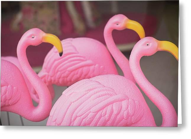 Plastic Pink Flamingos, Charleston Greeting Card by Julien Mcroberts
