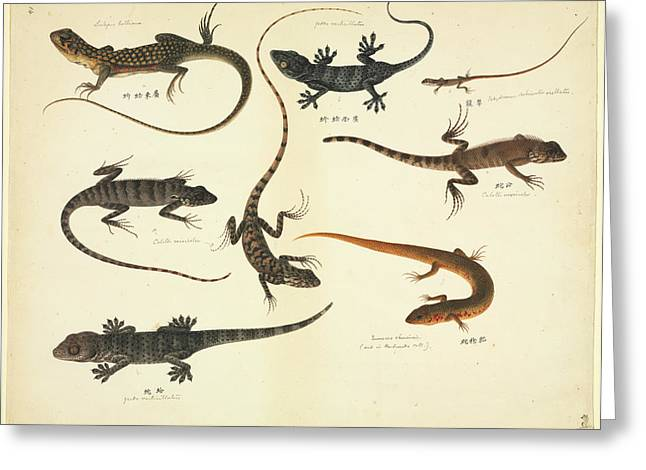 Plate 102: John Reeves Collection Zoology Greeting Card by Natural History Museum, London