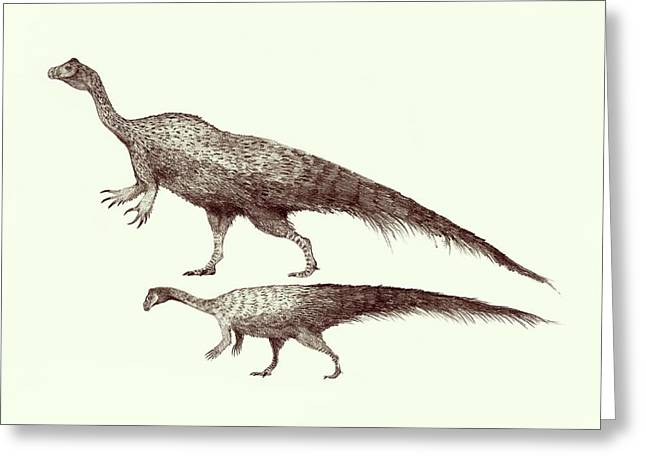 Plateosaurus Dinosaurs Greeting Card