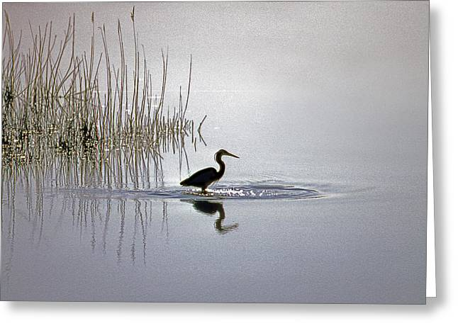 Platinum Heron Greeting Card by Skip Willits