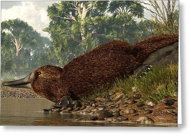 Platypus On The Shore Greeting Card by Daniel Eskridge