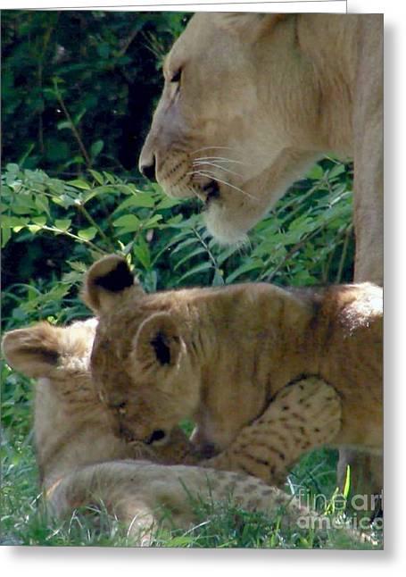 Playful Cubs Greeting Card