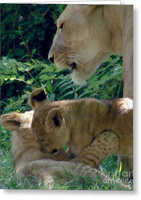 Playful Cubs Greeting Card
