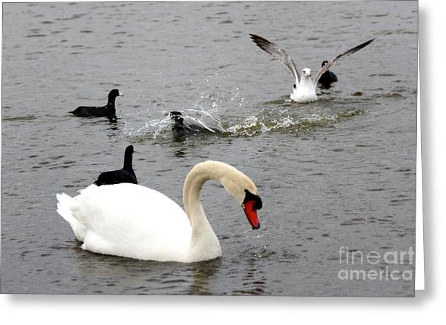 Playful Fun On The Lake Greeting Card by Kathy  White