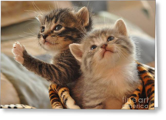 Playful Kittens Greeting Card