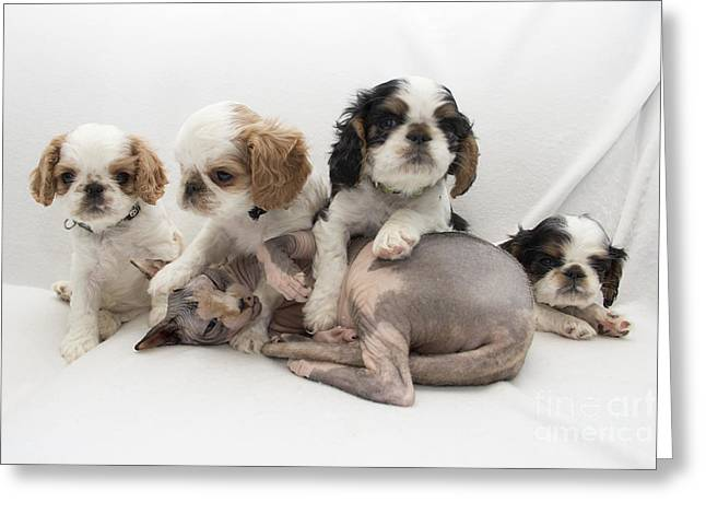 Playful Puppies Greeting Card