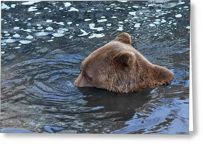 Playful Submerged Bear Greeting Card