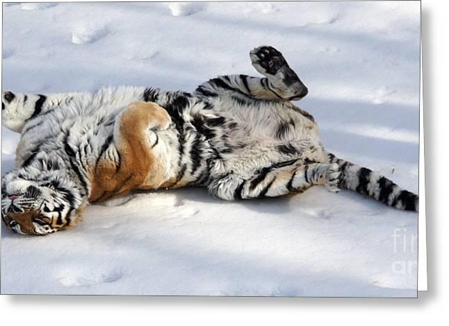 Playful Tiger Greeting Card