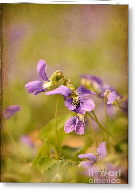 Playful Wild Violets Greeting Card by Lois Bryan