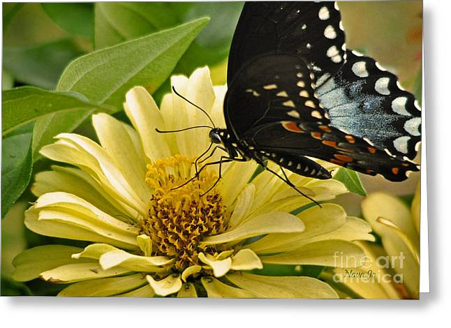 Playing Among The Zinnias Greeting Card by Nava Thompson
