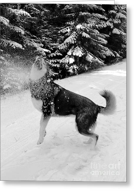 Playing In The Snow Greeting Card by Carol Groenen